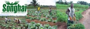 songhai-ferme-bio-modele-au-benin-reference-en-afrique