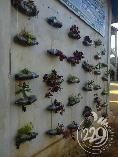 BENIN.developpement-durable-un-jardin-mural-par-lassociation-229-efficience-9