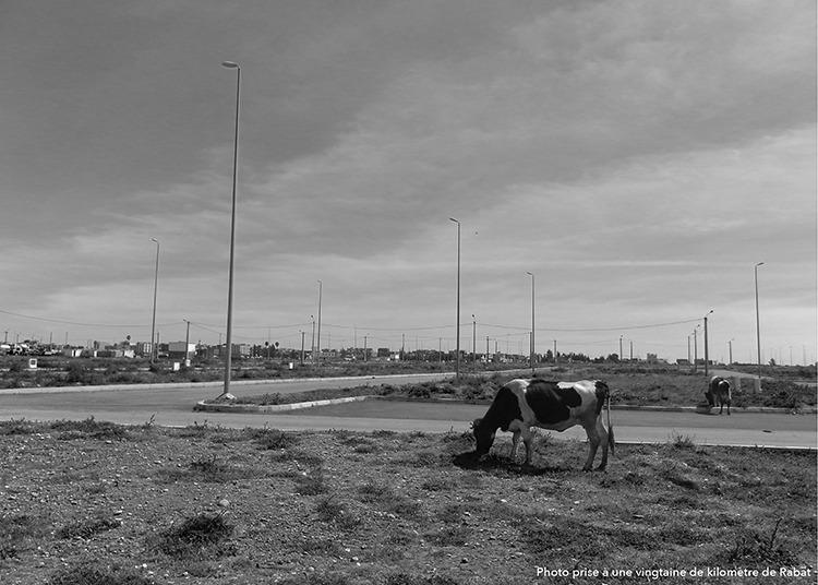 projet-de-fin-detude-habiter-le-plateau-se-sehoul-rabat-au-maroc-par-guillaume-haton-9